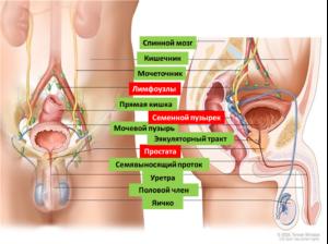 При лечении простатита не выходит сперма